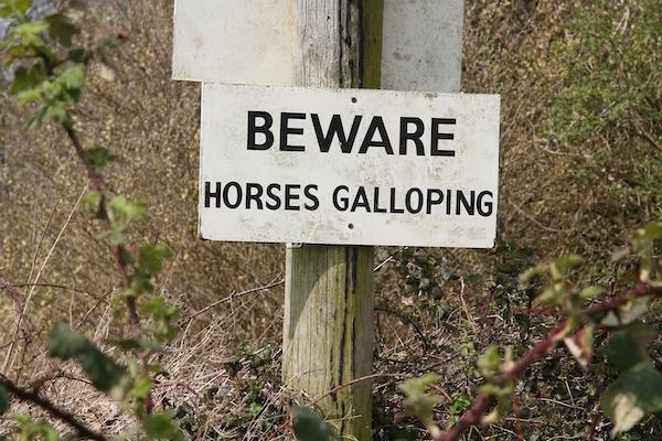 Equestrian IMG_5281
