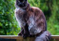 20 06 07 Feline Divine
